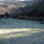 Tree planting, frosty morning