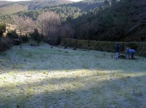 Tree planting, frosty morning
