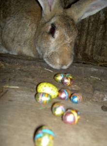 Easter bunny at Casalinho