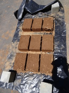 Our new adobe blocks drying. These will be used in the next course
