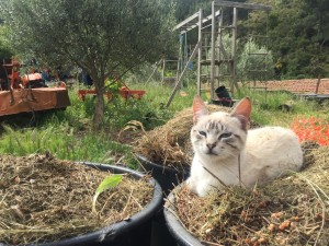 You didn't want to use this mulch, did you?